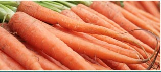 Carrot Seed Essential Oils