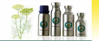 Dill Essential Oils Exporters