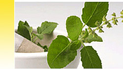 Herb Extract