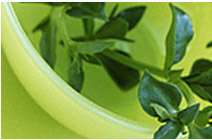 Aloe Vera Extracts Supplier