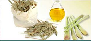 Lemongrass Oils Suppliers